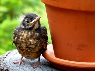 brown bird next to plant pot