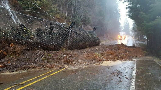 woody debris on road with a net full of fallen debris on top