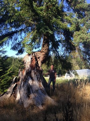 Tree with large curving trunk with person standing next to it