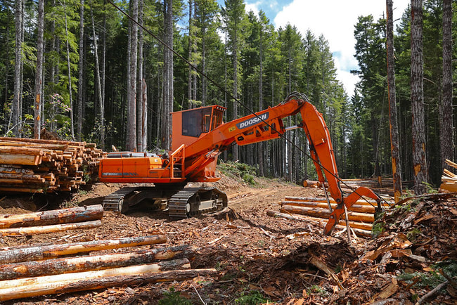 orange construction equipment moving large pieces of wood in a forest