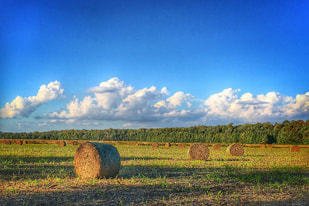Bales of hay in a field under a blue sky