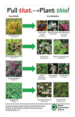 native plants to replace noxious weeds