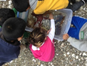 Children observing and feeling a sea star in a touch tank